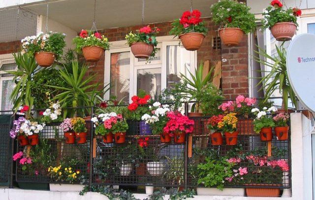 Выращивание цветов на балконе: особенности, интересные решения